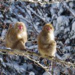 【猪苗代町】1名募集!!会津磐梯山と猪苗代湖が織りなす四季折々の雄大な自然に囲まれて暮らしてみませんか。ー有害鳥獣の駆除等支援ー