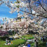 【猪苗代町】1名募集!!会津磐梯山と猪苗代湖が織りなす四季折々の雄大な自然に囲まれて暮らしてみませんか。ー観光振興支援ー